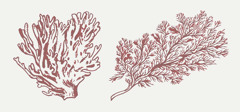 banner-coral-komprimiert